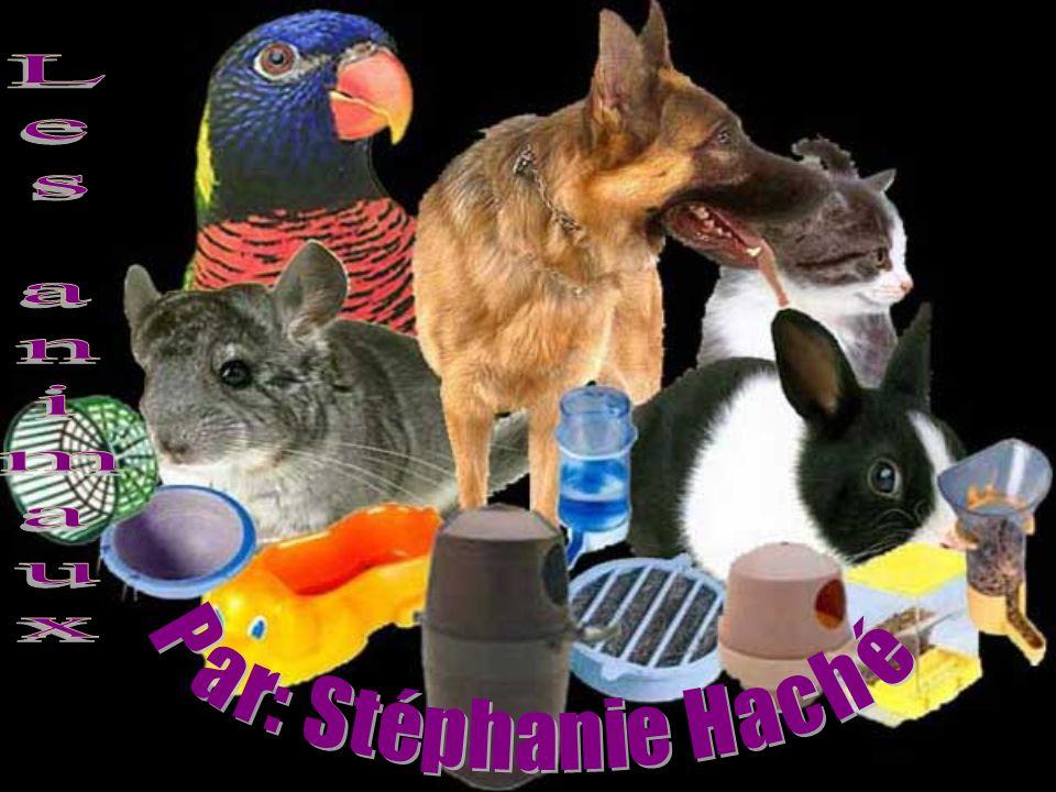 Les animaux Par: Stéphanie Haché