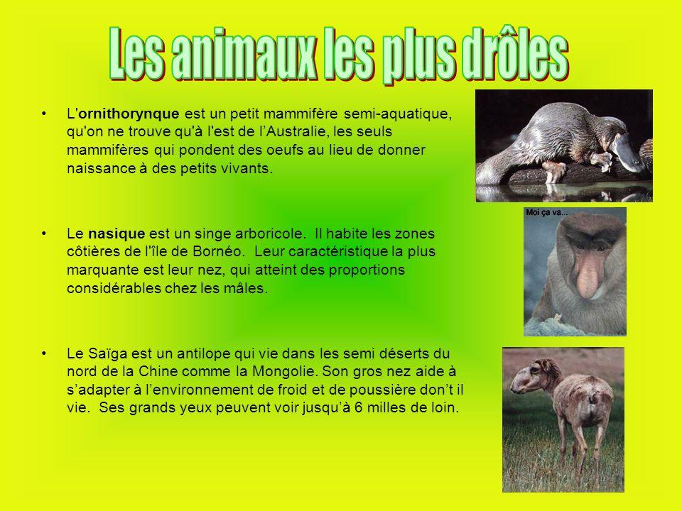 Les animaux les plus drôles