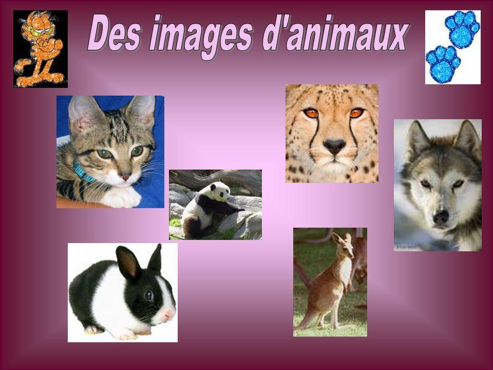Des images d animaux