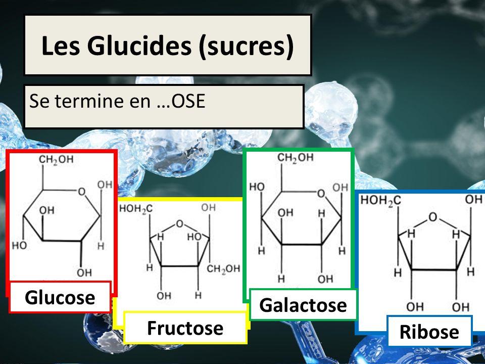 Les Glucides (sucres) Se termine en …OSE Glucose Galactose Fructose