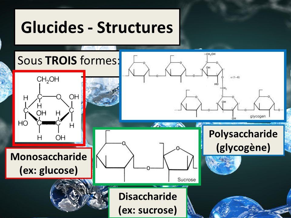 Glucides - Structures Sous TROIS formes: Polysaccharide (glycogène)