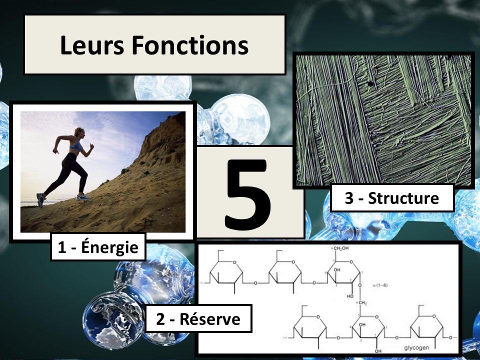 Leurs Fonctions 5 3 - Structure 1 - Énergie 2 - Réserve