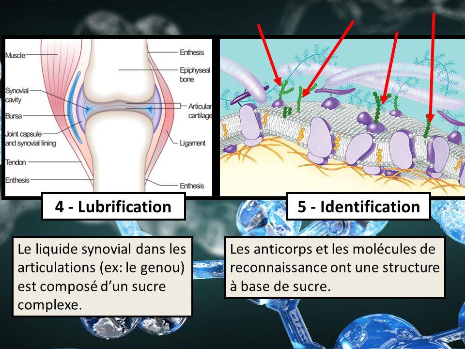 4 - Lubrification 5 - Identification