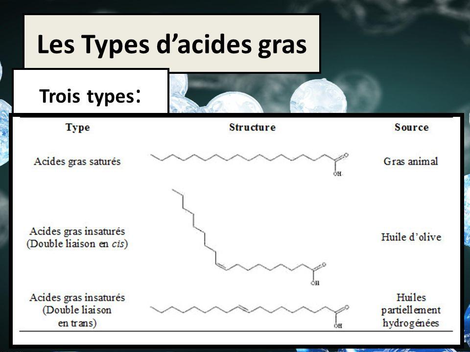 Les Types d'acides gras