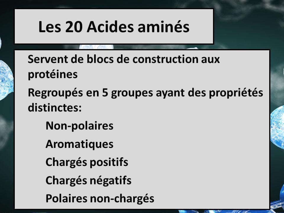 Les 20 Acides aminés