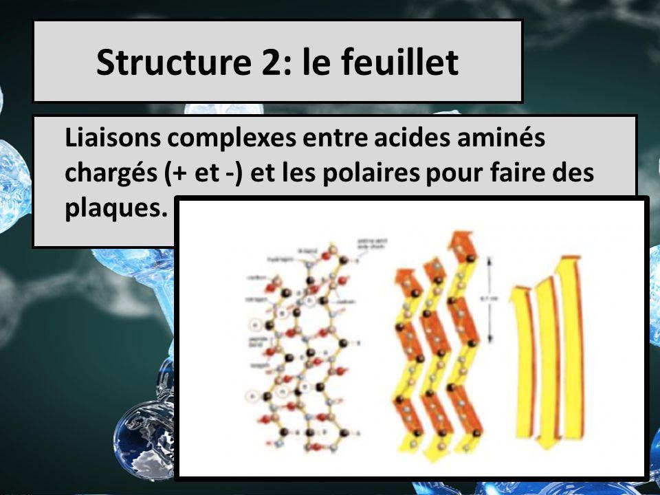 Structure 2: le feuillet