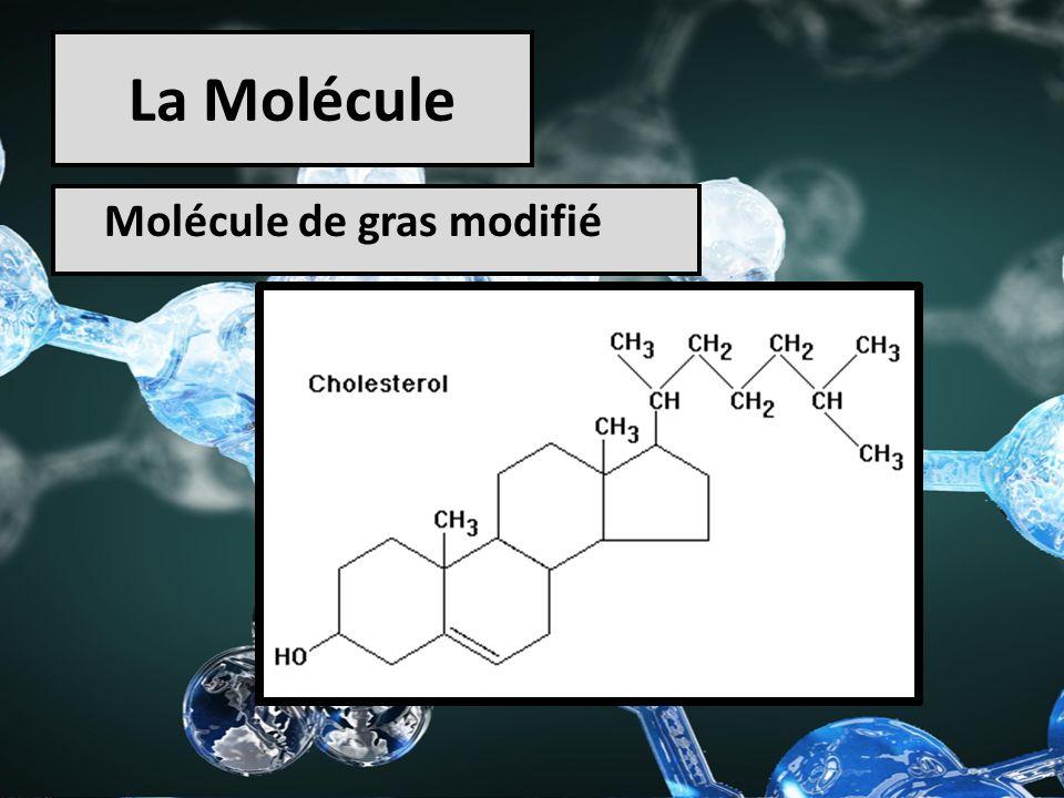 La Molécule Molécule de gras modifié