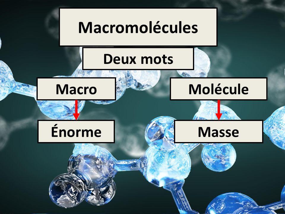 Macromolécules Deux mots Macro Molécule Énorme Masse
