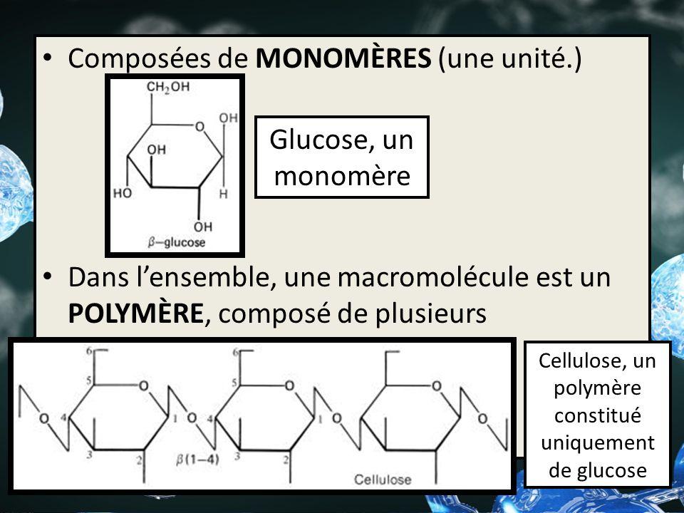 Cellulose, un polymère constitué uniquement de glucose