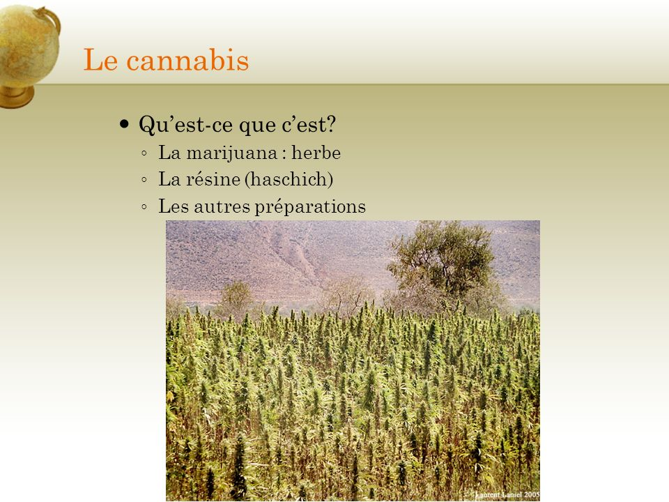 Le cannabis Qu'est-ce que c'est La marijuana : herbe