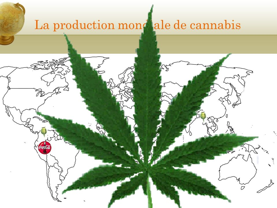 La production mondiale de cannabis