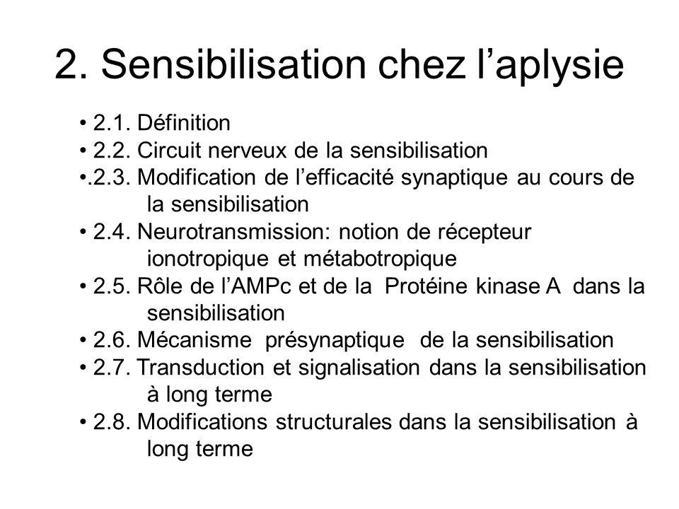 2. Sensibilisation chez l'aplysie