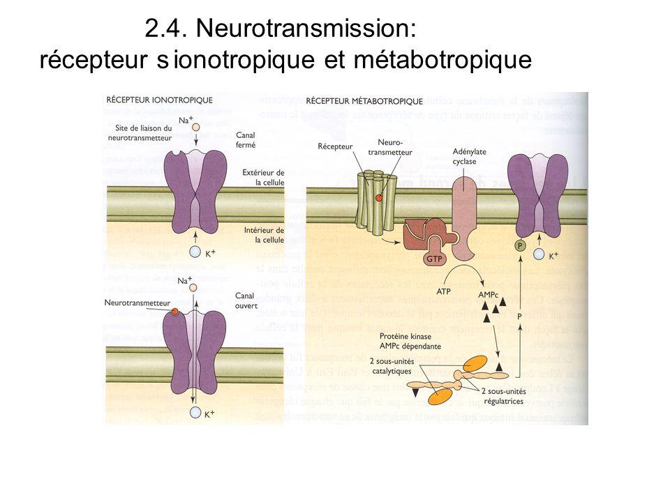 récepteur s ionotropique et métabotropique
