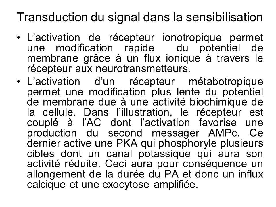Transduction du signal dans la sensibilisation