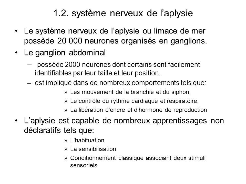 1.2. système nerveux de l'aplysie