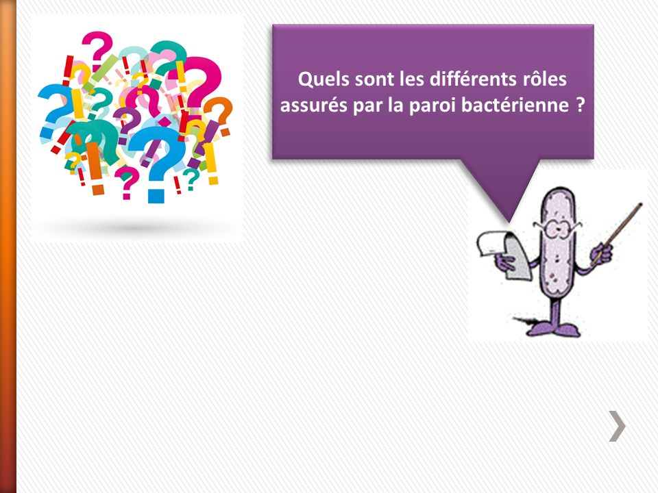 Quels sont les différents rôles assurés par la paroi bactérienne