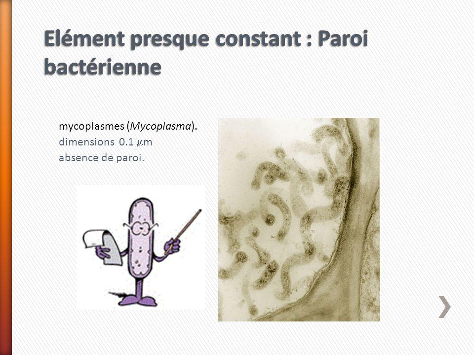 Elément presque constant : Paroi bactérienne