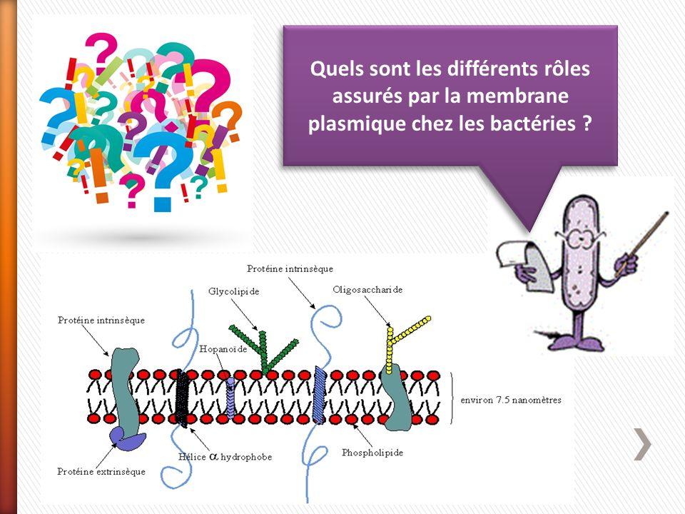 Quels sont les différents rôles assurés par la membrane plasmique chez les bactéries