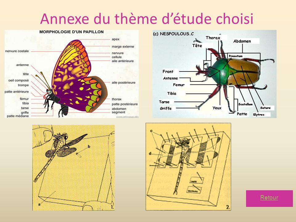 Annexe du thème d'étude choisi