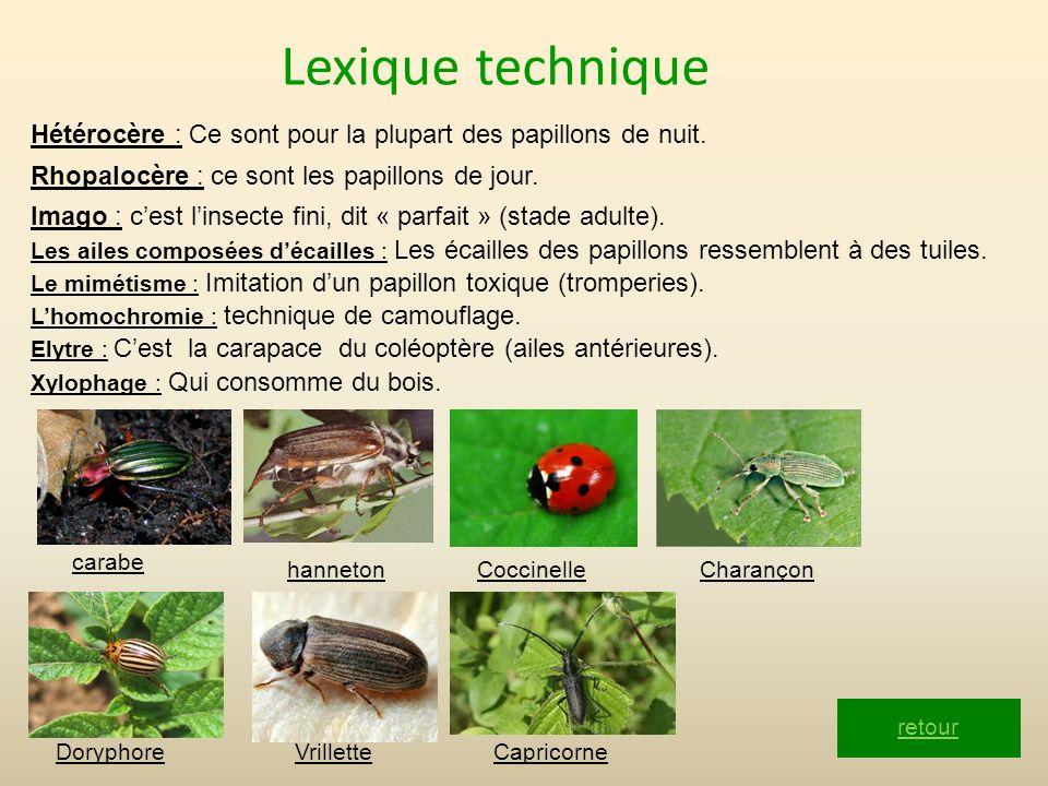 Lexique technique Hétérocère : Ce sont pour la plupart des papillons de nuit. Rhopalocère : ce sont les papillons de jour.