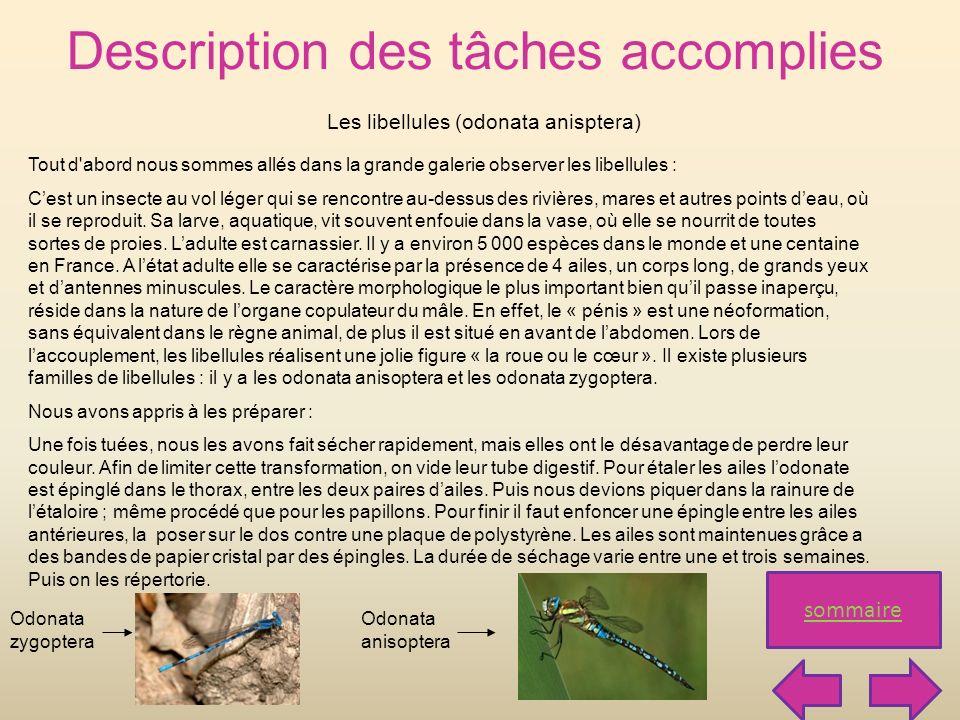 Les libellules (odonata anisptera)
