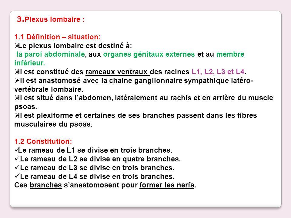 3.Plexus lombaire : 1.1 Définition – situation: Le plexus lombaire est destiné à: