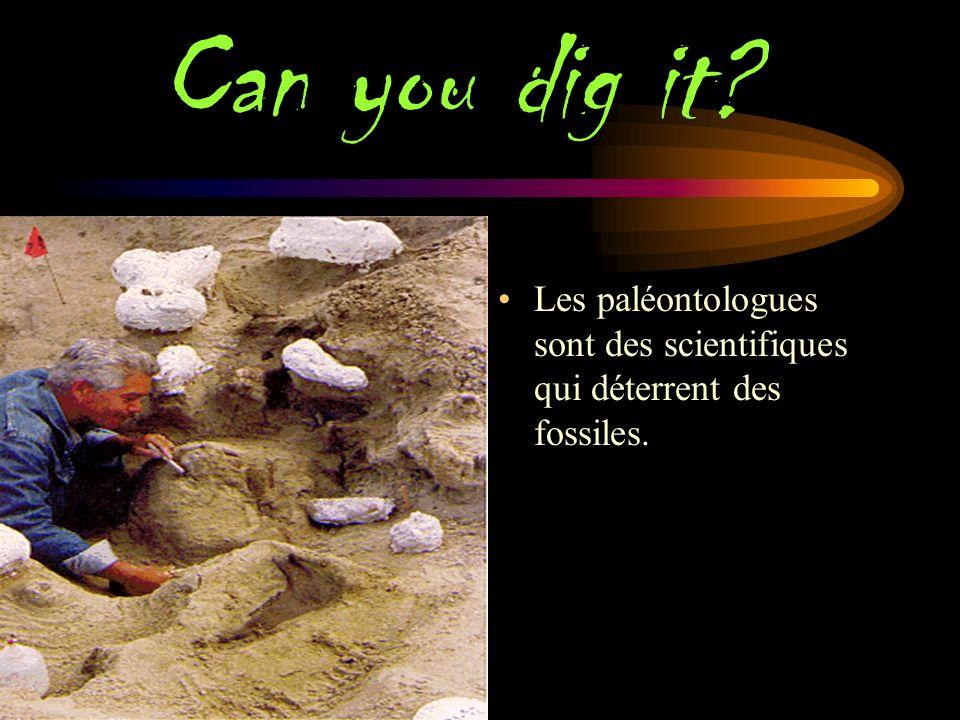 Can you dig it C Les paléontologues sont des scientifiques qui déterrent des fossiles.