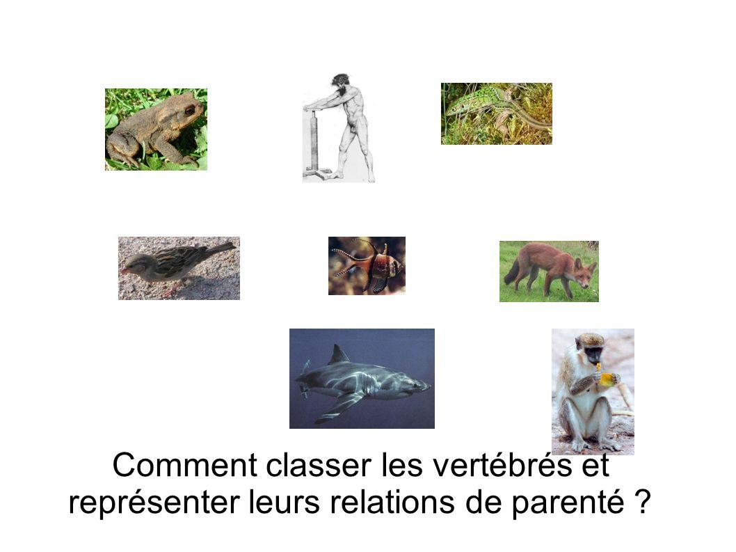 Comment classer les vertébrés et représenter leurs relations de parenté