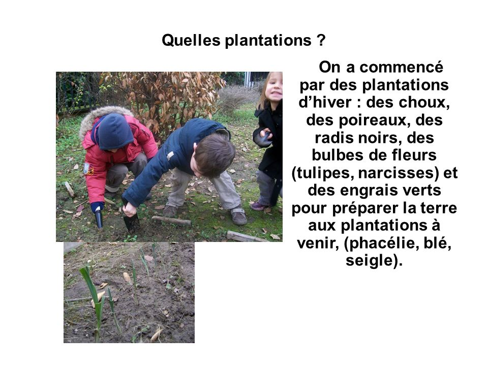 Quelles plantations