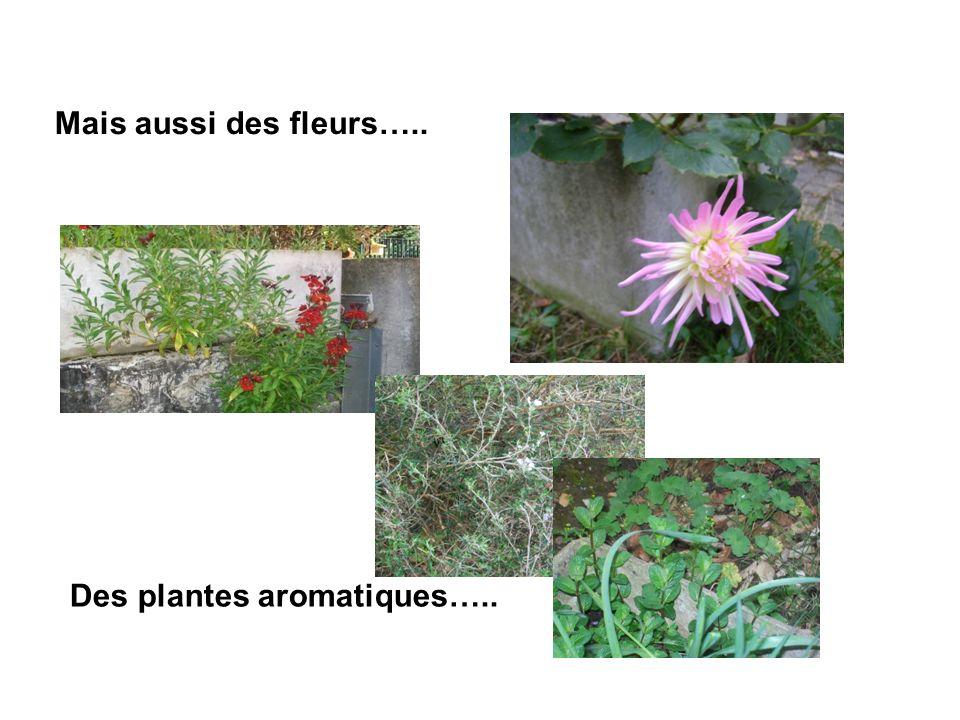 Mais aussi des fleurs….. Des plantes aromatiques…..