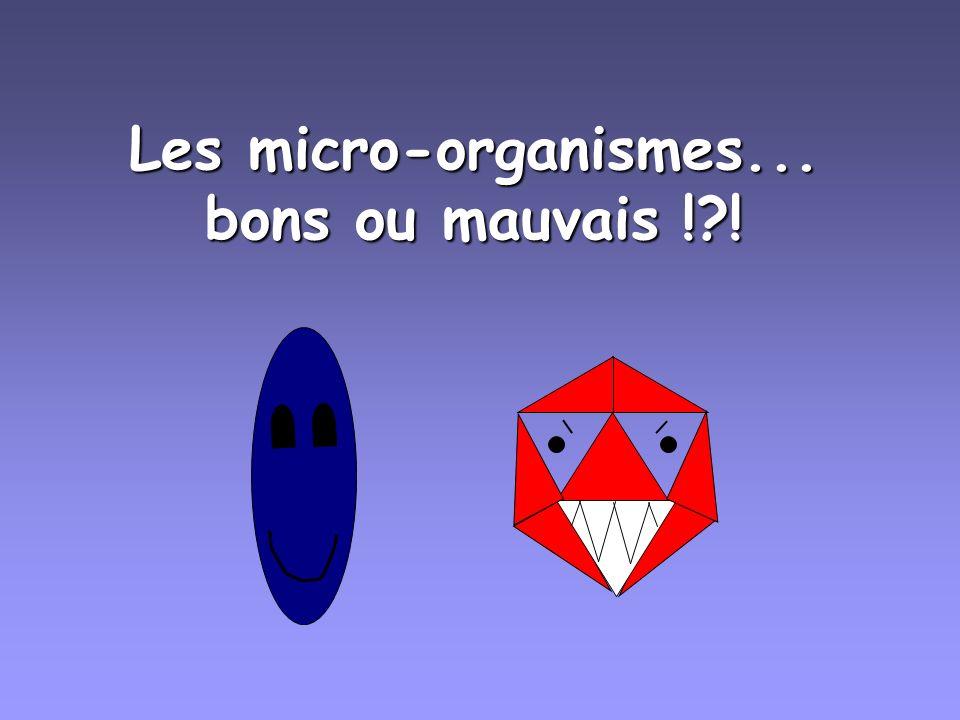Les micro-organismes... bons ou mauvais ! !