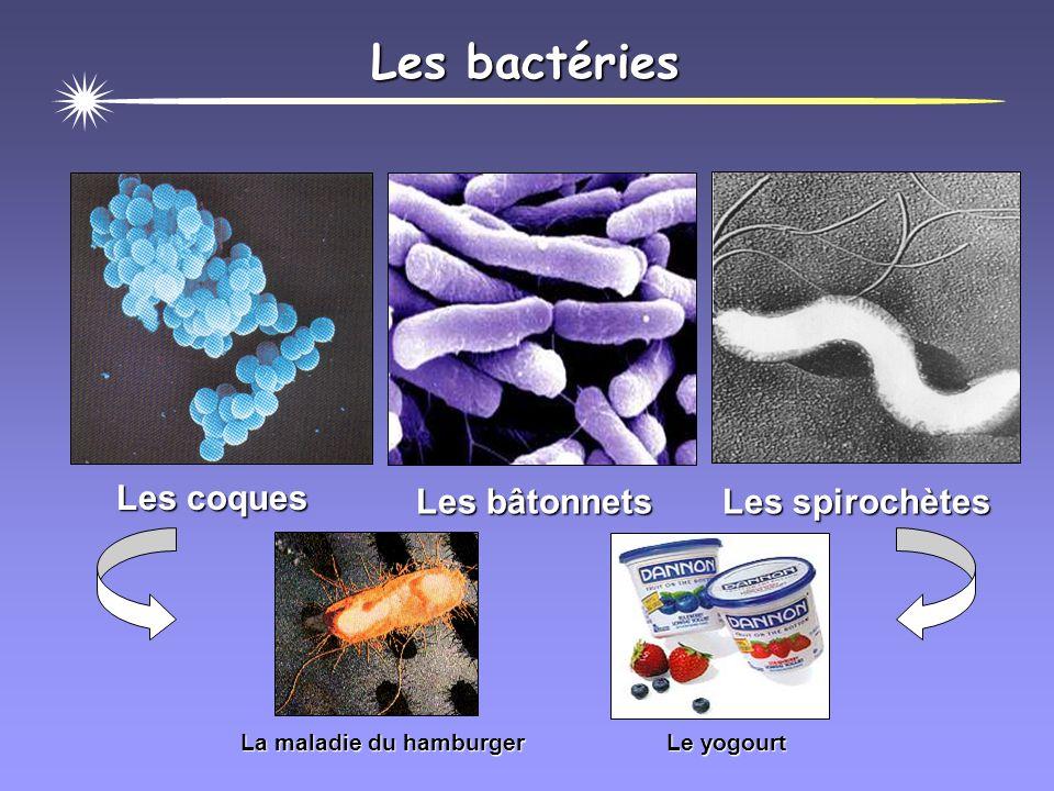Les bactéries Les coques Les bâtonnets Les spirochètes