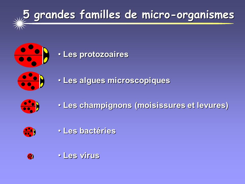 5 grandes familles de micro-organismes