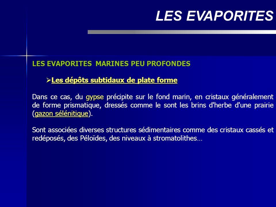 LES EVAPORITES LES EVAPORITES MARINES PEU PROFONDES