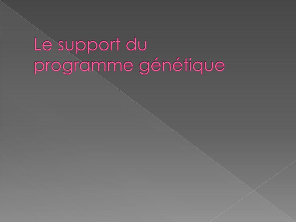 Le support du programme génétique