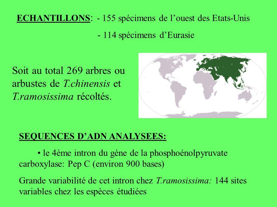 ECHANTILLONS: - 155 spécimens de l'ouest des Etats-Unis