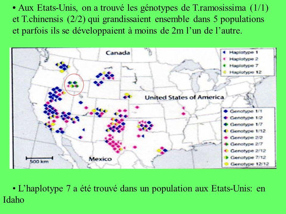 • Aux Etats-Unis, on a trouvé les génotypes de T