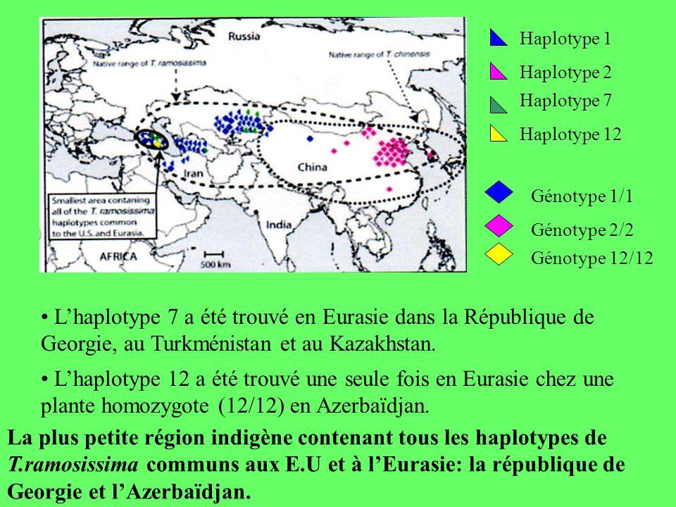 Haplotype 1 Haplotype 2. Haplotype 7. Haplotype 12. Génotype 1/1. Génotype 2/2. Génotype 12/12.