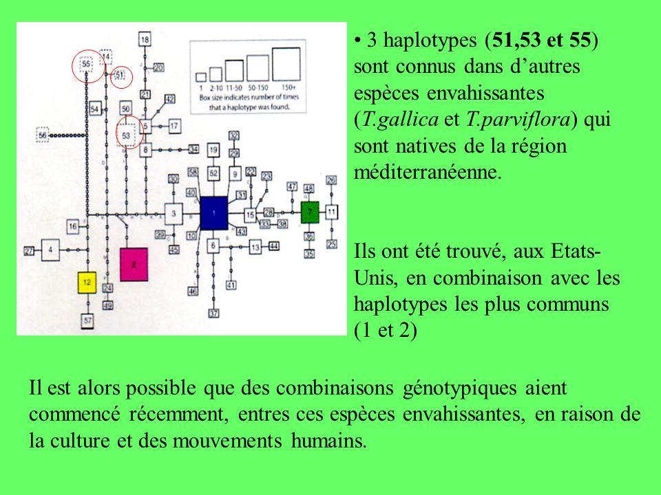 • 3 haplotypes (51,53 et 55) sont connus dans d'autres espèces envahissantes (T.gallica et T.parviflora) qui sont natives de la région méditerranéenne.