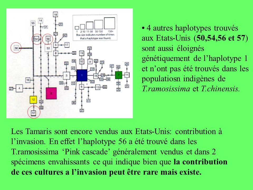 • 4 autres haplotypes trouvés aux Etats-Unis (50,54,56 et 57) sont aussi éloignés génétiquement de l'haplotype 1 et n'ont pas été trouvés dans les populatiosn indigènes de T.ramosissima et T.chinensis.