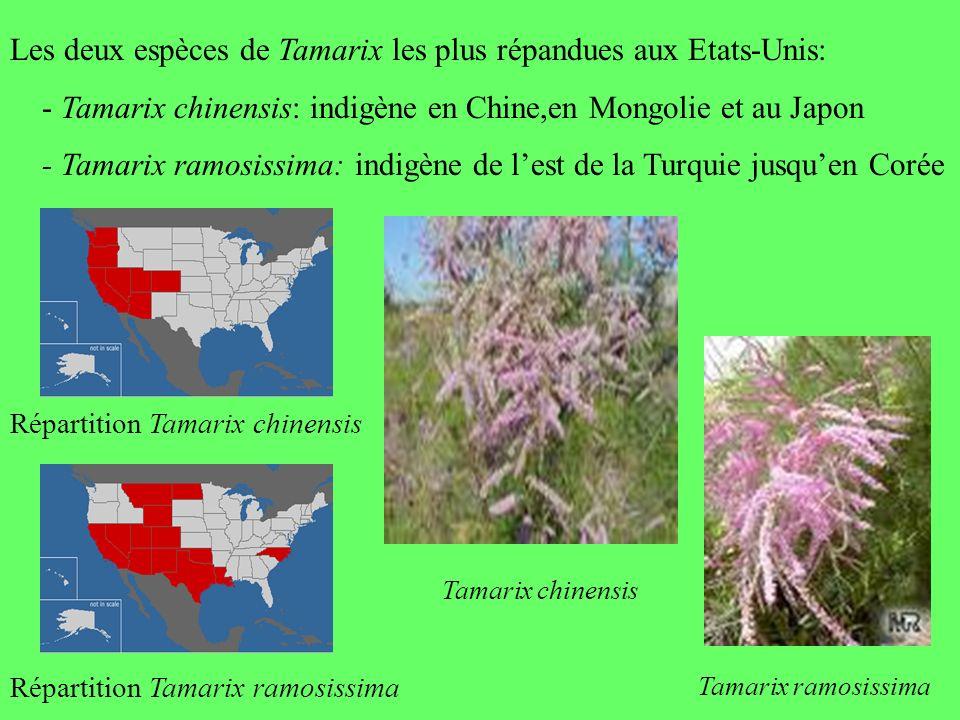 Les deux espèces de Tamarix les plus répandues aux Etats-Unis: