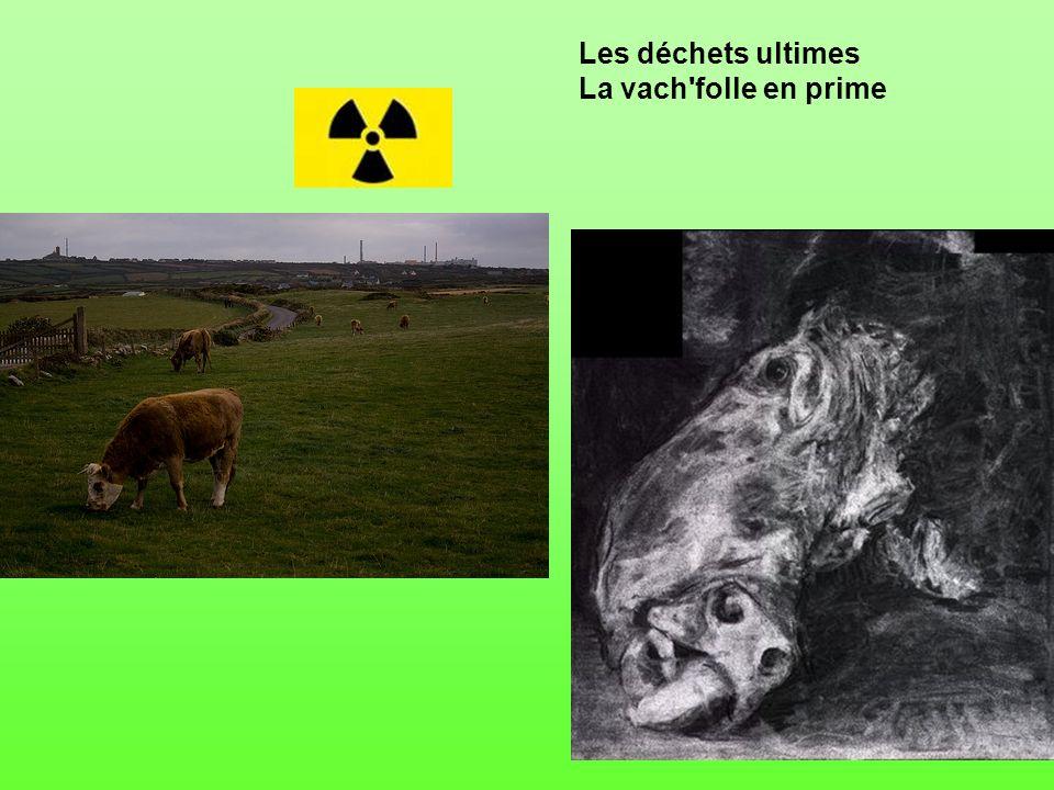 Les déchets ultimes La vach folle en prime