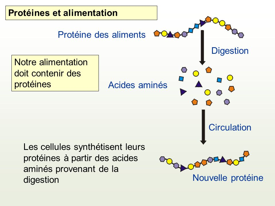 Protéines et alimentation