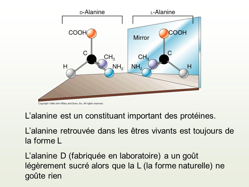 L'alanine est un constituant important des protéines.