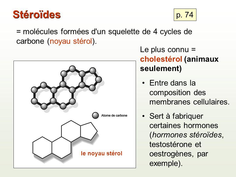 Stéroïdes p. 74. = molécules formées d un squelette de 4 cycles de carbone (noyau stérol). Le plus connu = cholestérol (animaux seulement)