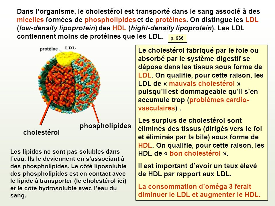 Il est important d'avoir un taux élevé de HDL par rapport aux LDL.