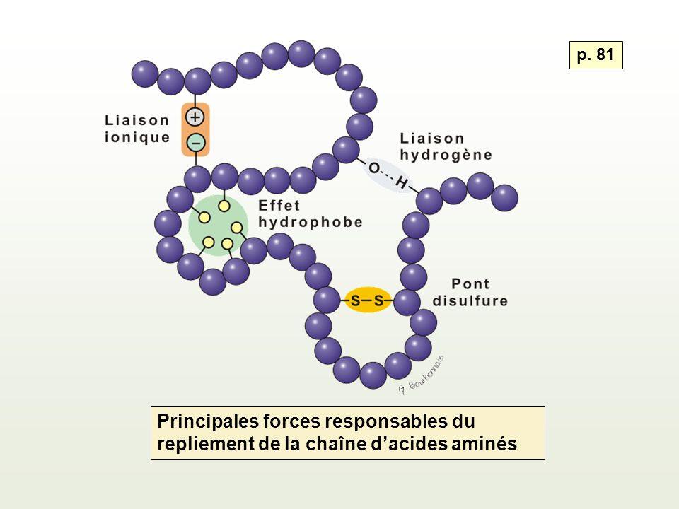 p. 81 Principales forces responsables du repliement de la chaîne d'acides aminés