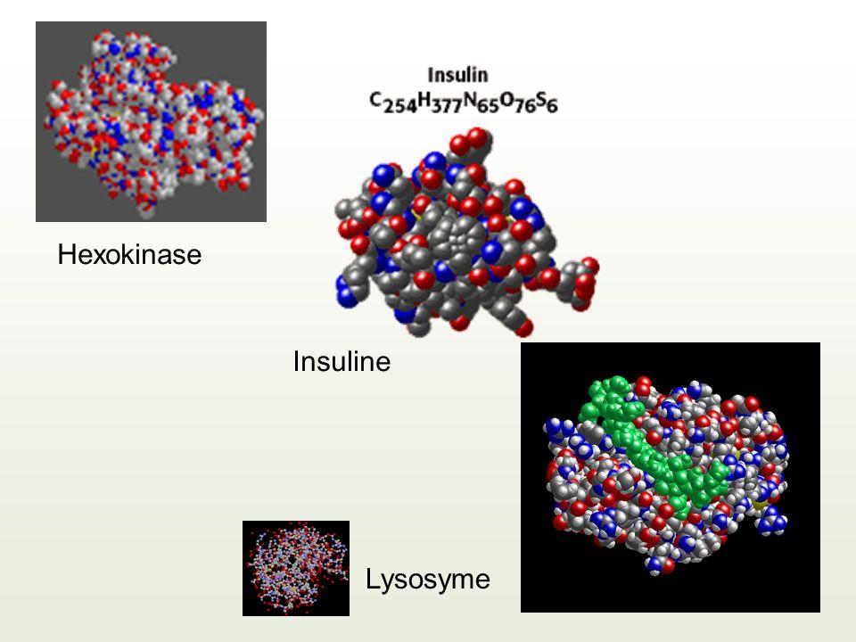 Hexokinase Insuline Lysosyme