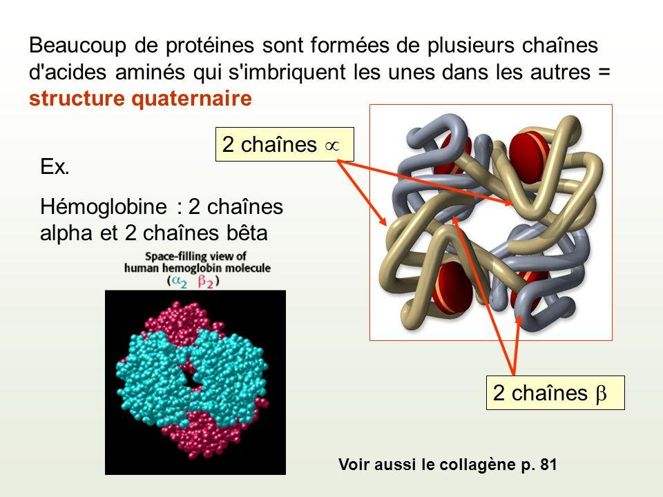 Hémoglobine : 2 chaînes alpha et 2 chaînes bêta
