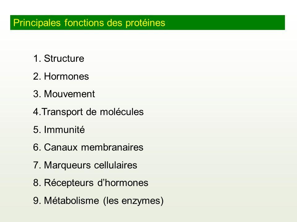 Principales fonctions des protéines